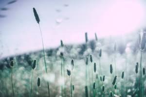 Allergie Naturopathie